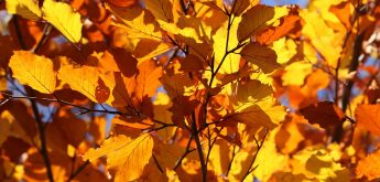Herbstlager