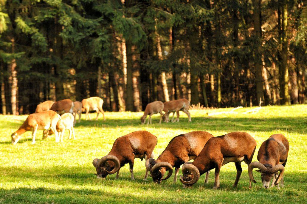 Wildpark Gangelt