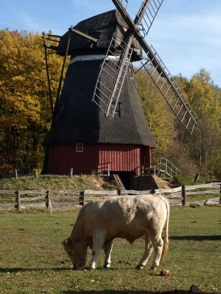 Wind Windmühle