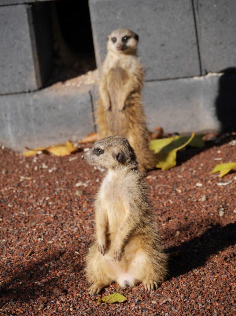 Aachener Tierpark Zoo Wildfreigehege