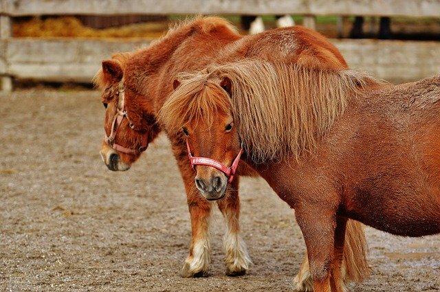 Ponyschule