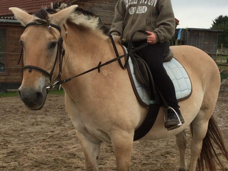 Ponyspiele