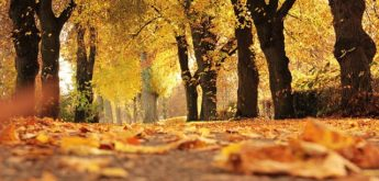 Herbstferienspiele