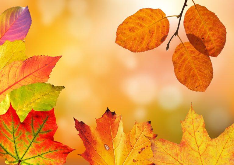Herbstferienworkshop