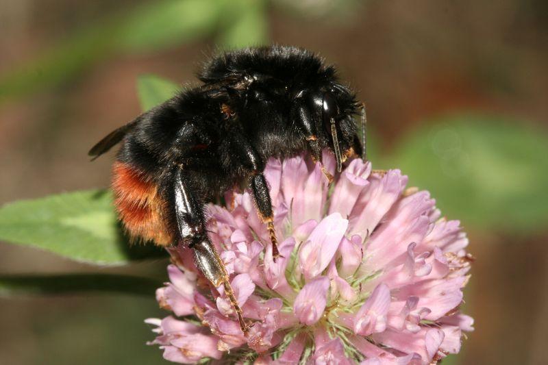 NABU - Insektensommer